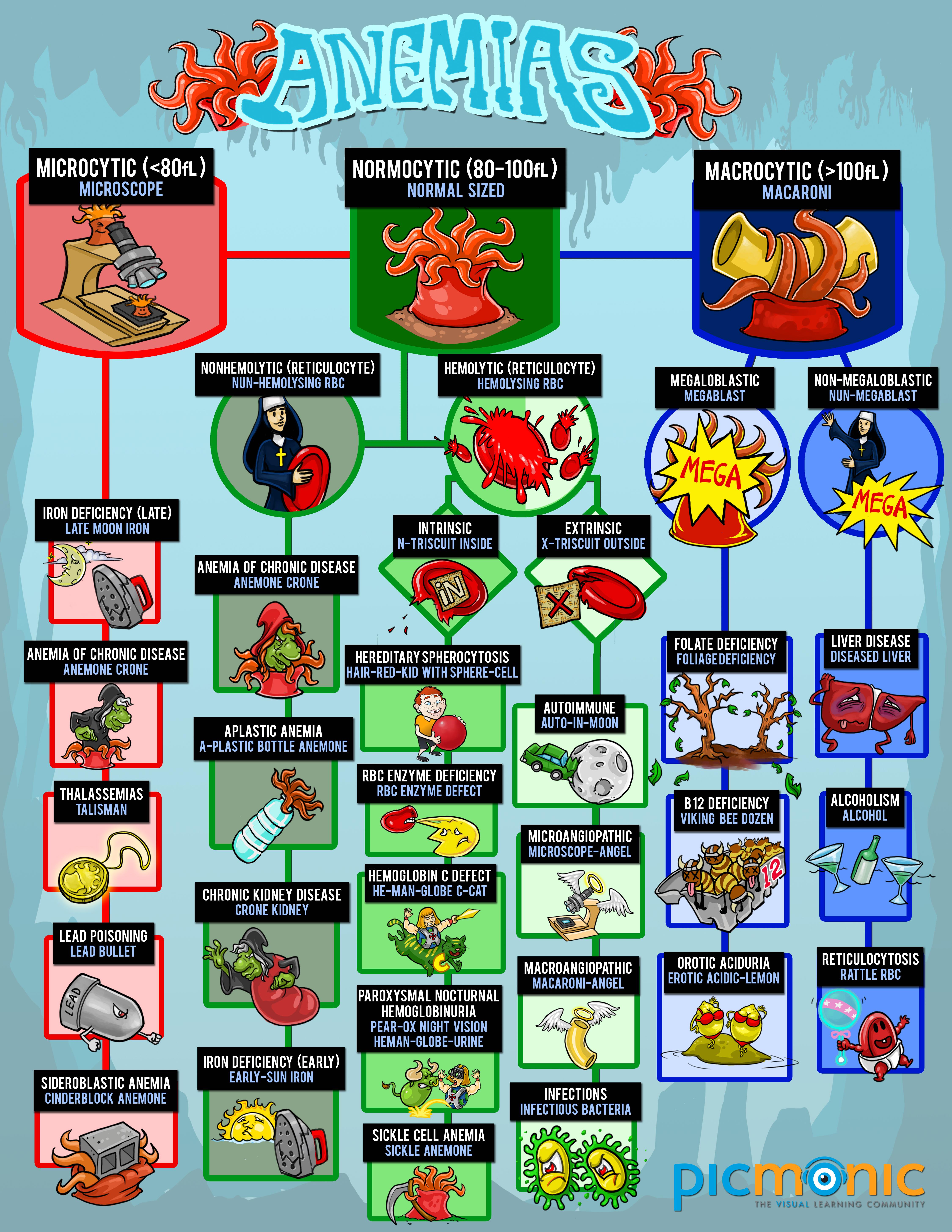 Anemias Infographic